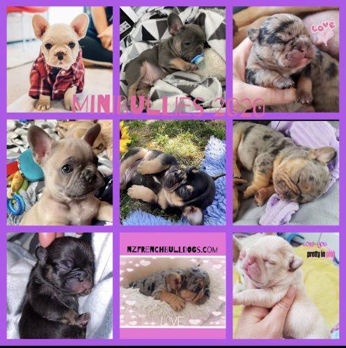 2020 puppies